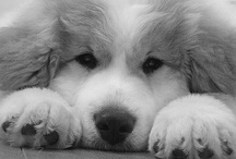 Wonderful dogs / by Renee Taylor