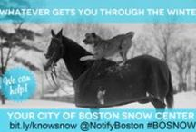 Winter PSAs / Shareable PSAs from the City of Boston: winter weather resources / by City of Boston