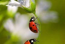 Mariquitas  / Mariquitas- Ladybug