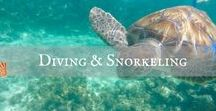 Diving and snorkeling / Underwater life. Underwater, snorkeling, scuba diving, diving, PADI Open Water Diver, diving tricks, diving advice, where to go diving, best diving spots, best snorkeling spots.