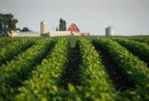 Farmtog / Photos of agriculture by Joseph L. Murphy. Farmtog is short for Farm Photographer. / by Joe Murphy