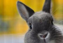 The Rabbit Room / by Sara
