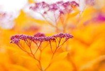 Colorful Nature / beautiful colors of nature / by Karolina B.