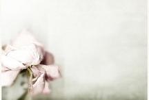 flowers / by Lotte-Marijn Millar