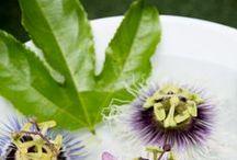 Bohemian Modern / Tropical and Bohemiam Modern Home and Garden Ideas.