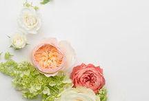 Flowers / by Tiffanie Luster