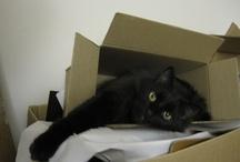 Kitties I love / by Gina Dolin