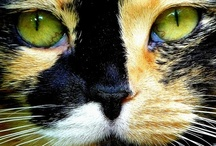 cats / by Peace