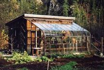 DIY/Greenhouse / by Amber Grunden