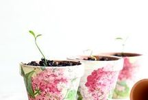 create: house plants. / by Cheryl Shaulis