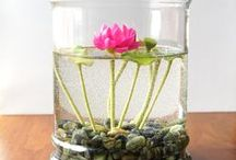 Container Gardens / by Kathy Buxton