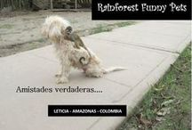 Rainforest funny pets / funny pets from the amazon rainforest, Leticia Amazonas Colombia