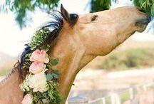Horse Love! / by Dawn Sweeney