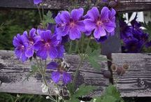 Flowers / by Darla Whipple