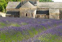 Lavender and gold color palette