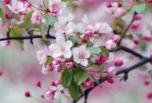Hallo lente! / Natuur | Pasen | spring| voorjaar De lente brengt kleur en groen in huis!