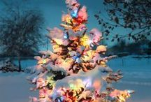 Christmas Tree Beauty / by Bobbi Willmer