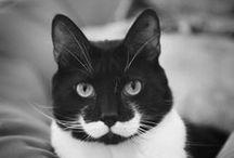 kitty cat / by Aimee Quinn