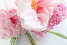 Bloemen van papier / roses de papier | paper roses | papieren rozen