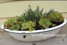 Think outside the pot / if it holds dirt you can plant in it. I'm planting in things other than pots