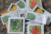 Seeds, Seedlings, Seedpods / help identifying seeds, seedlings, and seedpods