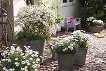 * Jardin / Plantes *