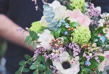 Bloom - Cactus - Succulent