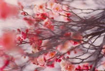 Love Flowers / by Permsiri Yodkaew