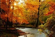 Finally Fall!  / by Linda Rudman Behind My Red Door