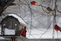 Beautiful Things / by Christine Numainville