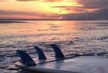 [AcervoRedley] Imagens de Surf