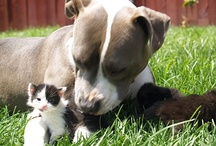 Pit bull love!