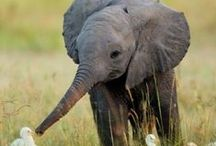 Elephant / by Lynne Florig-Beck