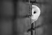 Animals / by Dana Spinney