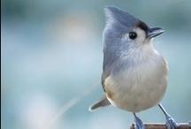 Birds / Un pájaro no canta porque tenga una respuesta. Canta porque tiene una canción. • A bird doesn't sing because it has an answer. Sing because it has a song. / by Diego Raimonda