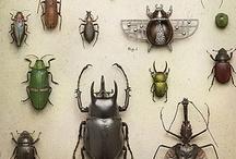 Bugs / Uma paixão!  / by Lana Mayra