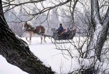 Snow Scenes/Ice Sculptures/Winter / by Nancy Owens Merenda
