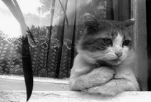 cats dont cry.