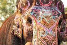I <3 Elephants / by Alex Barreuther