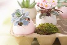 Chocolate Bunnies and Marshmallow Chicks / Easter