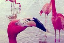 Flamingo & Pineapple love