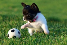 Sporty Dogs / Dogs doing sports