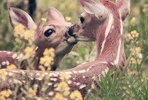 Animal Kingdom / by Kasey James