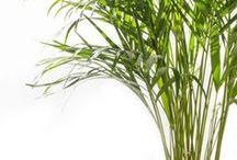haus: pflanzen