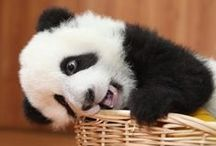 #Pandas / Pandas, pandas y maaaaaaaaaas panadas