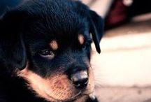 #Puppies / Perritos, perritos y maaaaaaas perritos