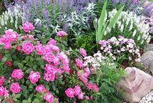 Fleur/Garden