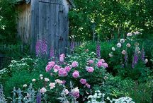 Backyard inspiration / by Suzanne Talbot