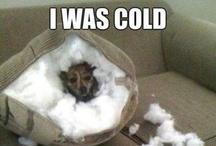 Funny! / by Brooke Andersen