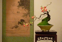 Great Bonsai trees / A collection of the greatest bonsai trees that I know of, with some stunning images! All #bonsai images are posted from http://www.bonsaiempire.com